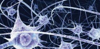 rebuild myelin sheath