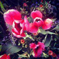 lisa davis flower 1