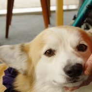 How Pet Therapy Can Help Fibromyalgia Symptoms