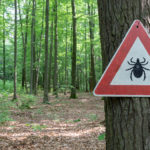 Chronic Lyme Disease: Opening Up About the Struggle
