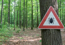 lyme disease, Lyme Disease is Worse Than We Thought