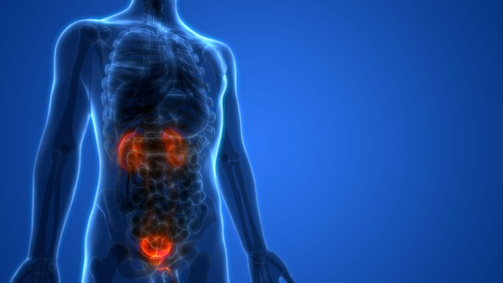 What You Need to Know About Bladder Health and Pain