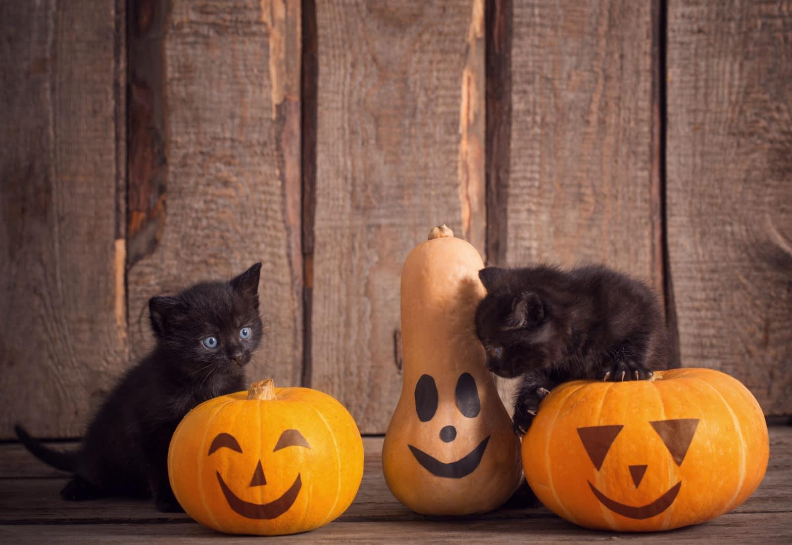 Boo-tacular Hacks: Halloween and Chronic Pain