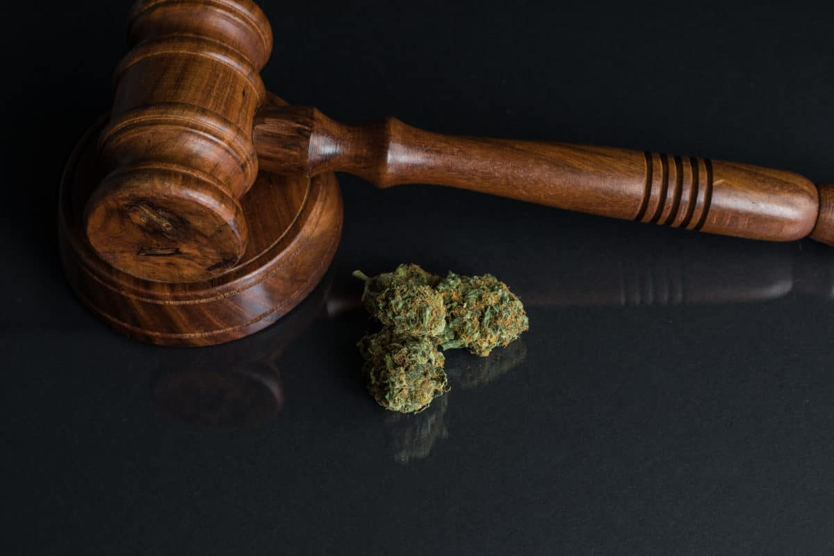 marijuana legalization and pain management marijuana buds and a gavel