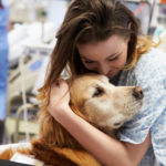 Animal Therapy for Chronic Pain: How Fluffy Can Help Heal