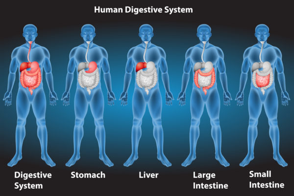Ulcer Pain Relief human digestive system