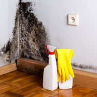How To Spot Life Threatening Black Mold