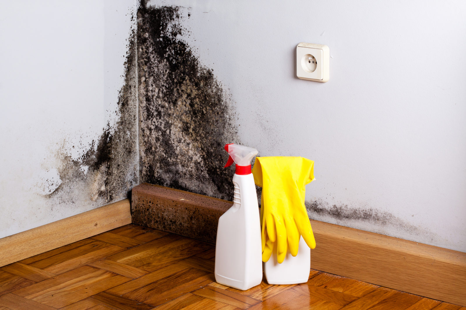 how to spot black mold, How To Spot Life Threatening Black Mold