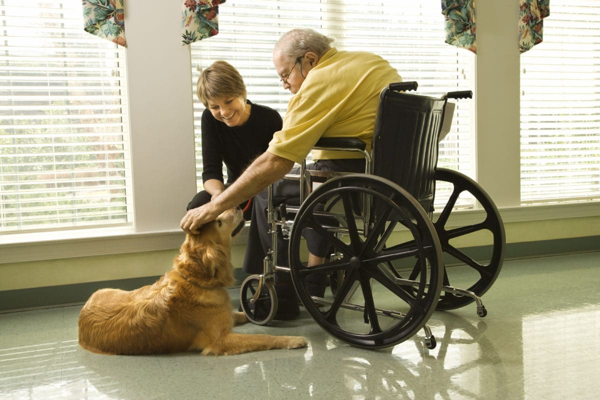 old man in wheelchair with therapy dog
