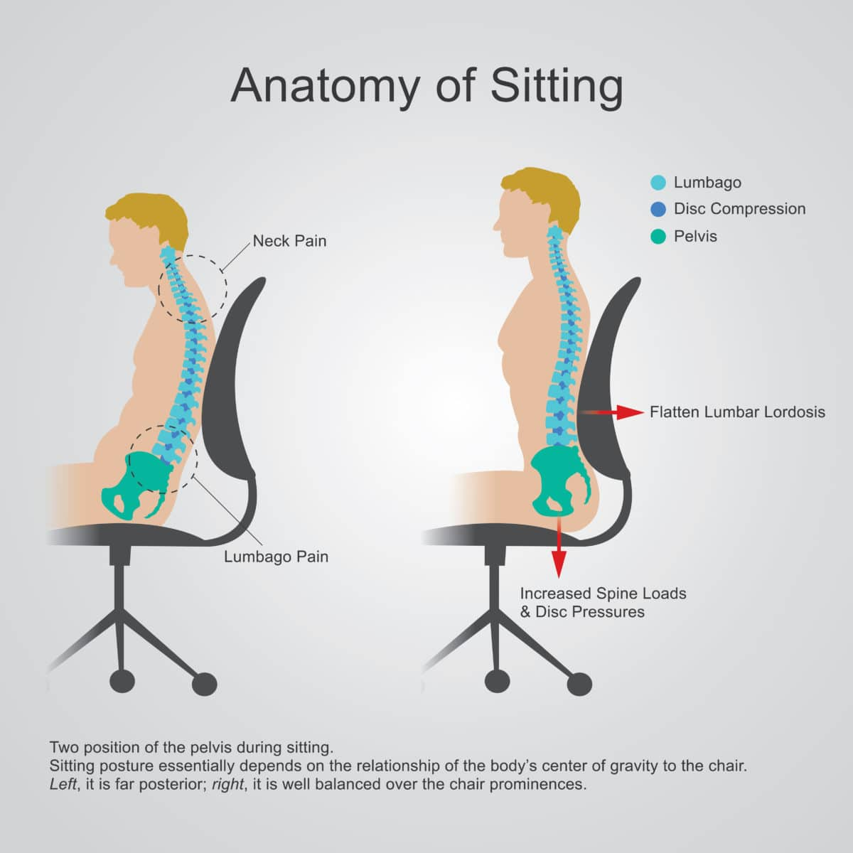 graphic showing the anatomy of sitting