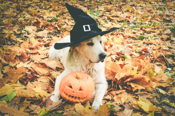 enjoy Halloween with chronic pain