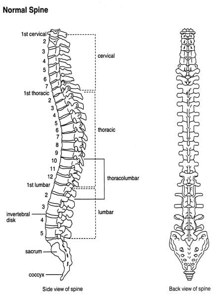 spine-front-side